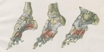 Anatomische Literatur